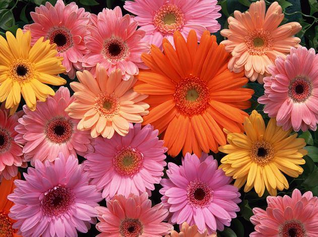 数輪のお花