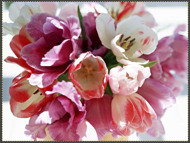 飾っているお花の写真
